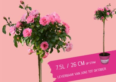 Hugs & Kisses - bloemen5
